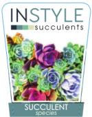 AA-Succulents-Generic-136x300