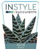 Aloe-gator-instyle-succulents-142x300-142x300