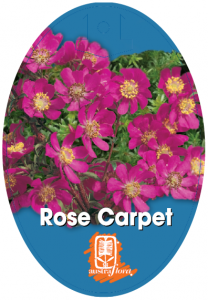 Bauera-Rose-Carpet-208x300