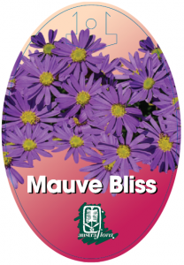 Brachyscome-Mauve-Bliss-208x300