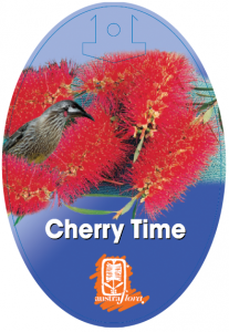 Callistemon-Cherry-Time-207x300