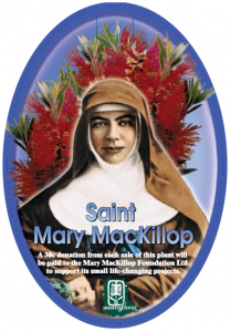 Callistemon-Saint-Mary-Mackillop-209x300