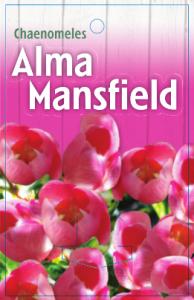 Chaenomeles-Alma-Mansfield-194x300