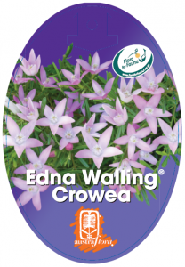 Crowea-Edna-Walling-208x300