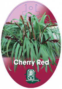 Dianella-Cherry-Red-209x300