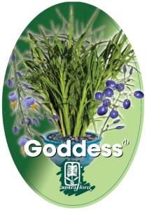 Dianella-Goddess-210x300