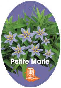 Dianella-Petite-Marie-208x300