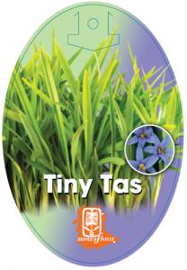 Dianella-Tiny-Tas-208x300