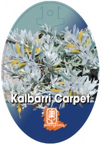 Eremophila-Kalbarri-Carpet-209x300