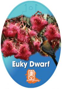 Eucalyptus-Euky-Dwarf-209x300
