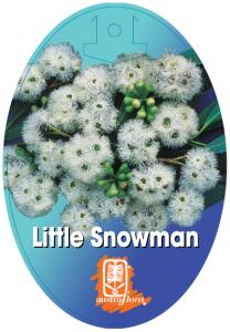 Eucalyptus-Little-Snowman-208x300