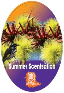 Eucalyptus-Summer-Scentsation-208x300