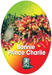 Grevillea-Bonnie-Prince-Charlie-208x300