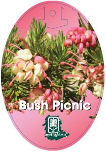 Grevillea-Bush-Picnic-209x300