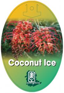 Grevillea-Coconut-Ice-209x300