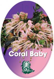 Grevillea-Coral-Baby-208x300