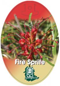 Grevillea-Fire-Sprite-209x300