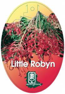 Grevillea-Little-Robyn-208x300