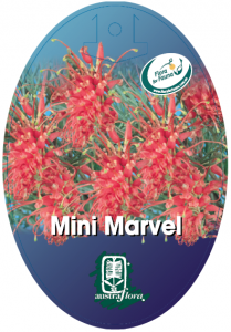 Grevillea-Mini-Marvel-209x300