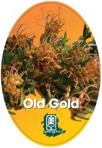 Grevillea-Old-Gold-208x300