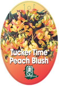 Grevillea-Peach-Blush-208x300