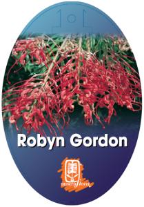 Grevillea-Robyn-Gordon-209x300