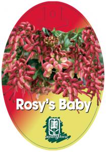 Grevillea-Rosys-Baby-209x300