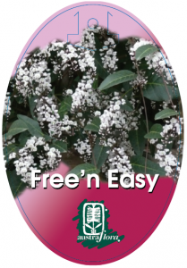Hardenbergia-Free-N-Easy-209x300