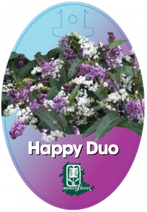 Hardenbergia-Happy-Duo-208x300