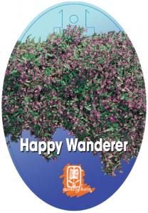 Hardenbergia-Happy-Wanderer-208x300