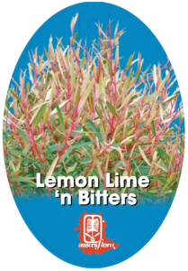 Leptospermum-Lemon-Lime-N-Bitters-209x300