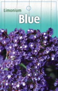 Limonium-Blue-191x300