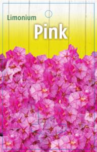 Limonium-Pink-192x300
