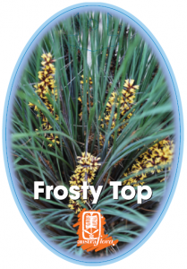 Loandra-Frosty-Top-209x300