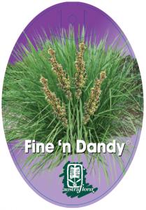 Lomandra-Fine-N-Dandy-209x300