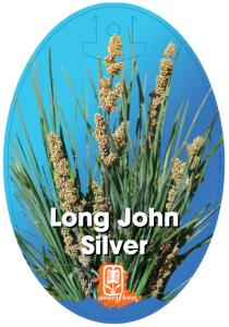 Lomandra-Long-John-Silver-210x300