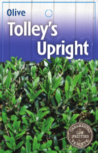 Olive-Tolleys-Upright-193x300