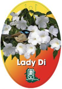 Pandorea-Lady-Di-208x300