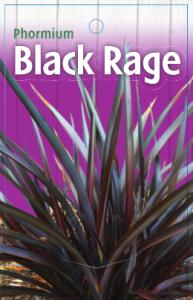 Phormium-Black-Rage-193x300