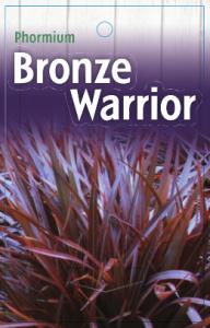 Phormium-Bronze-Warrior-192x300