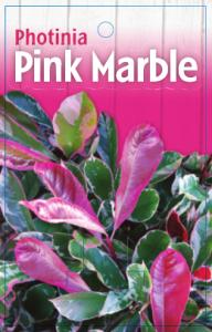 Photinia-Pink-Marble-192x300