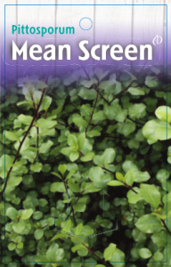 Pittosporum-Mean-Screen-192x300