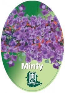 Prostanthera-Minty-209x300