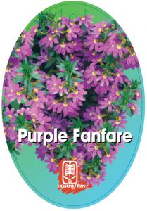 Scaevola-Purple-Fanfare-209x300