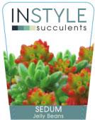 Sedum-Jelly-Beans-136x300