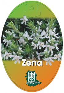 Westingia-Zena-209x300