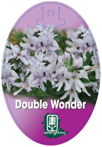 Westringia-Double-Wonder-209x300
